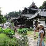 Hydrangeas at Mimurotoji Temple