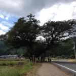 Hiking & Haiku on the Uminobe-no-Michi Trail
