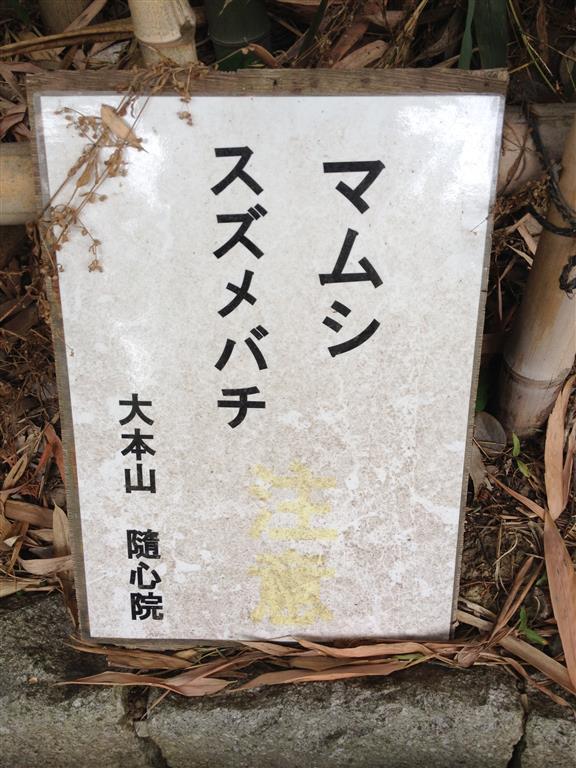image-6 (Medium)