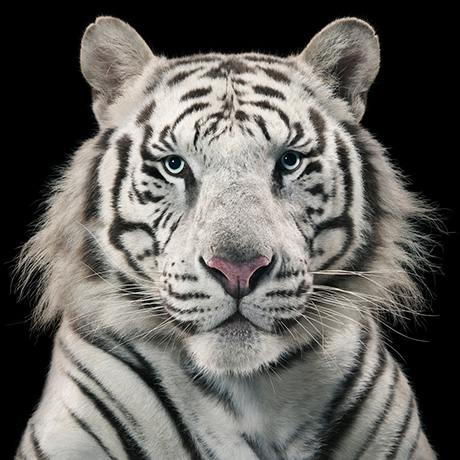 Photo by Tim Flach