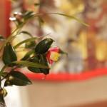 Camellia Tea Ceremony