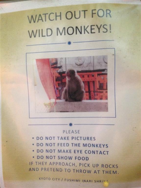 I'm sorry to say I didn't see a single monkey.