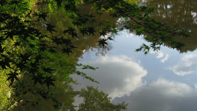 Pond (Medium)