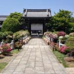 Azaleas at Myoman-ji Temple
