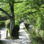 Walking the Path of Philosophy on Inside Kyoto