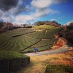 Tour Kyoto by Bicycle with Noru Kyoto